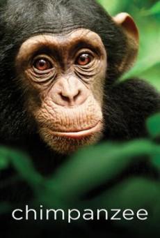 Chimpanzee ชิมแปนซี ผจญภัยในป่ากว้าง (2012) บรรยายไทย