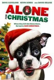 Alone for Christmas แก๊งน้องหมาโดดเดี่ยวผู้น่ารัก