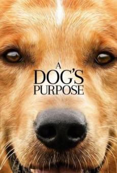 A Dog's Purpose หมา เป้าหมาย และเด็กชายของผม (2017)