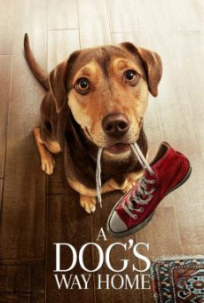 A Dog's Way Home เพื่อนรักผจญภัยสี่ร้อยไมล์ (2019)