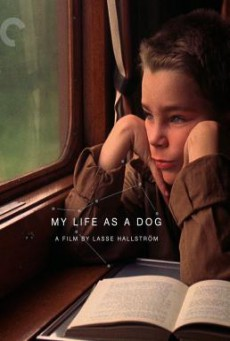 My Life as a Dog (Mitt liv som hund) (1985) บรรยายไทย